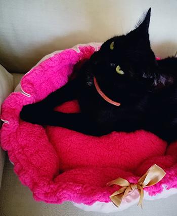 macska párna varrás